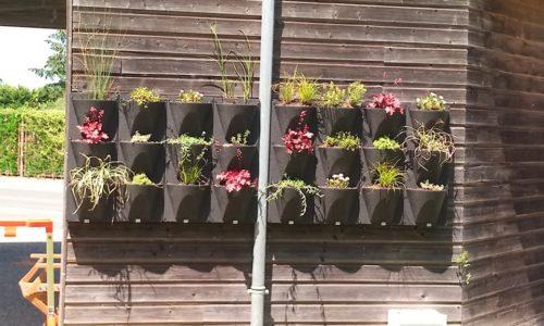 Le projet de mur végétal achevé
