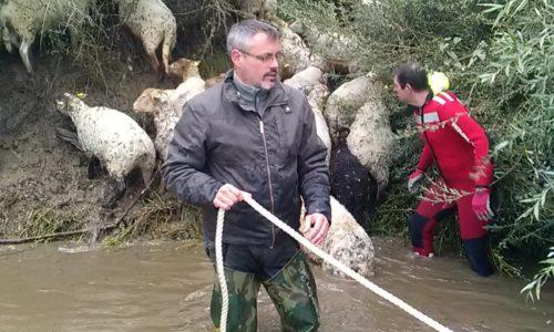 sauvetage de moutons coincés sur une île de Loire